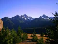 лес, pine, озеро