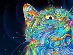 кот, color, art
