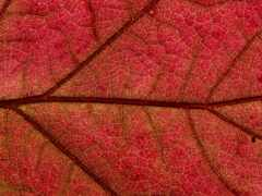 textura, листь, naturale