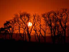 дерево, sun, закат