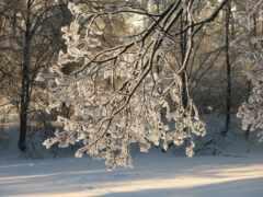 winter, natural, landscape