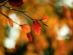 осень, branch, makryi