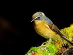 птицы, красивые, весной