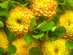 цветы, москва