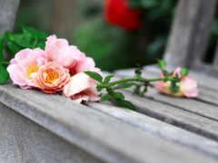 cvety, flowers, розы