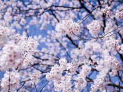 garden, плэйкаст, cherry