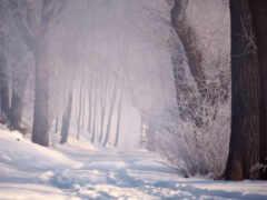 winter, заставка, дорогой