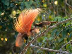 птица, funart, animal
