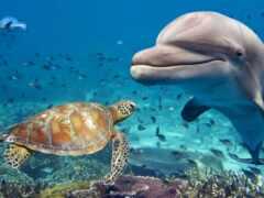 египетский, дельфина, rook