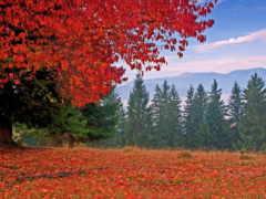 осень, горах, природа