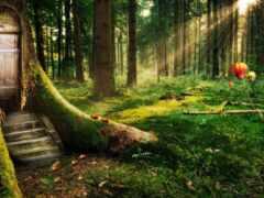 pantalla, лес, bosque