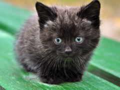 ми, котята, против