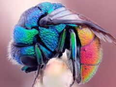 радуга, макро, пчелка