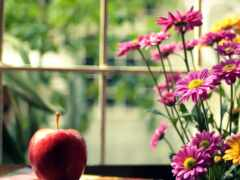 цветы, title, цветочек
