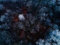 зимний лес, вид с верху