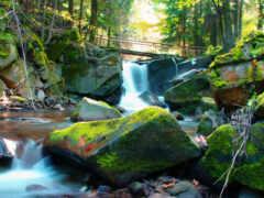 река, landscape, мох
