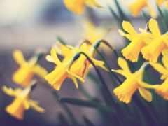 flowers, nature Фон № 26898 разрешение 1920x1200