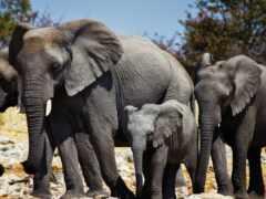 слон, африка, funart