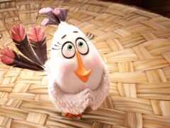 птица, angry, movie