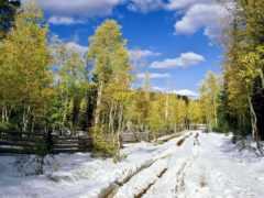лес, весна, снег