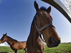 лошадей, веселые