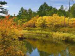 осень, природа, переход