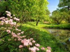 garden, botanical, санкт