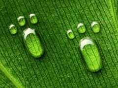 drop, лист, зелёный