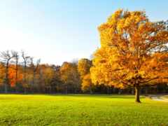 autumn, landscape Фон № 31585 разрешение 1920x1080