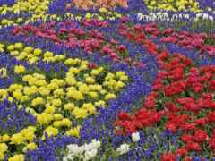 весна, cvety, клумба