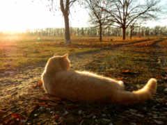 кот, red, осень