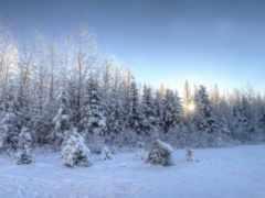 winter, снег, trees