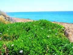 растения, кіпру