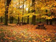 золотая, листва, осень