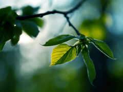 природа, drawing, листва