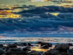 финляндия, цветы, ocean