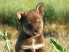 собаки, животные, картинка