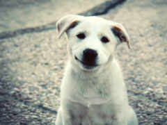 белая, собака, собаку