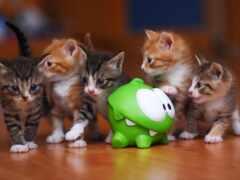 toy, котенок, кот