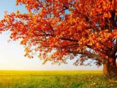 дерево, пасть, осень