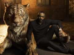 тигр, jungle, книга