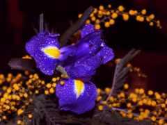 blue, цветочное, цветы