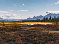 landscape, tundra, аляска