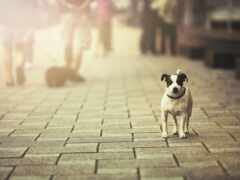 щенок, собака, одиночка
