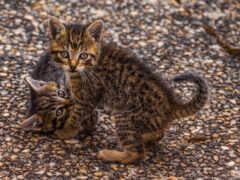 кот, котенок, animal