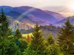 радуга, гора, дерево