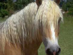 лошадь, лошади, jivaya