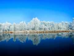 отражение, природа, вода,
