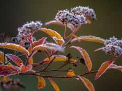 веточка, растение, freeze