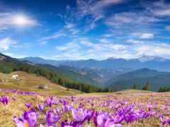 красивый, весна, cvety
